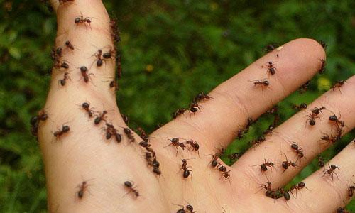 Eliminare le Formiche - Ragno