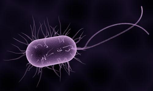 Eliminare i Topi - Virus e Batteri