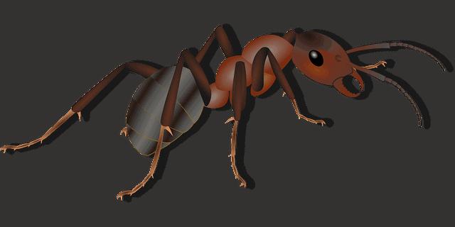 Eliminare gli scarafaggi - Formiche